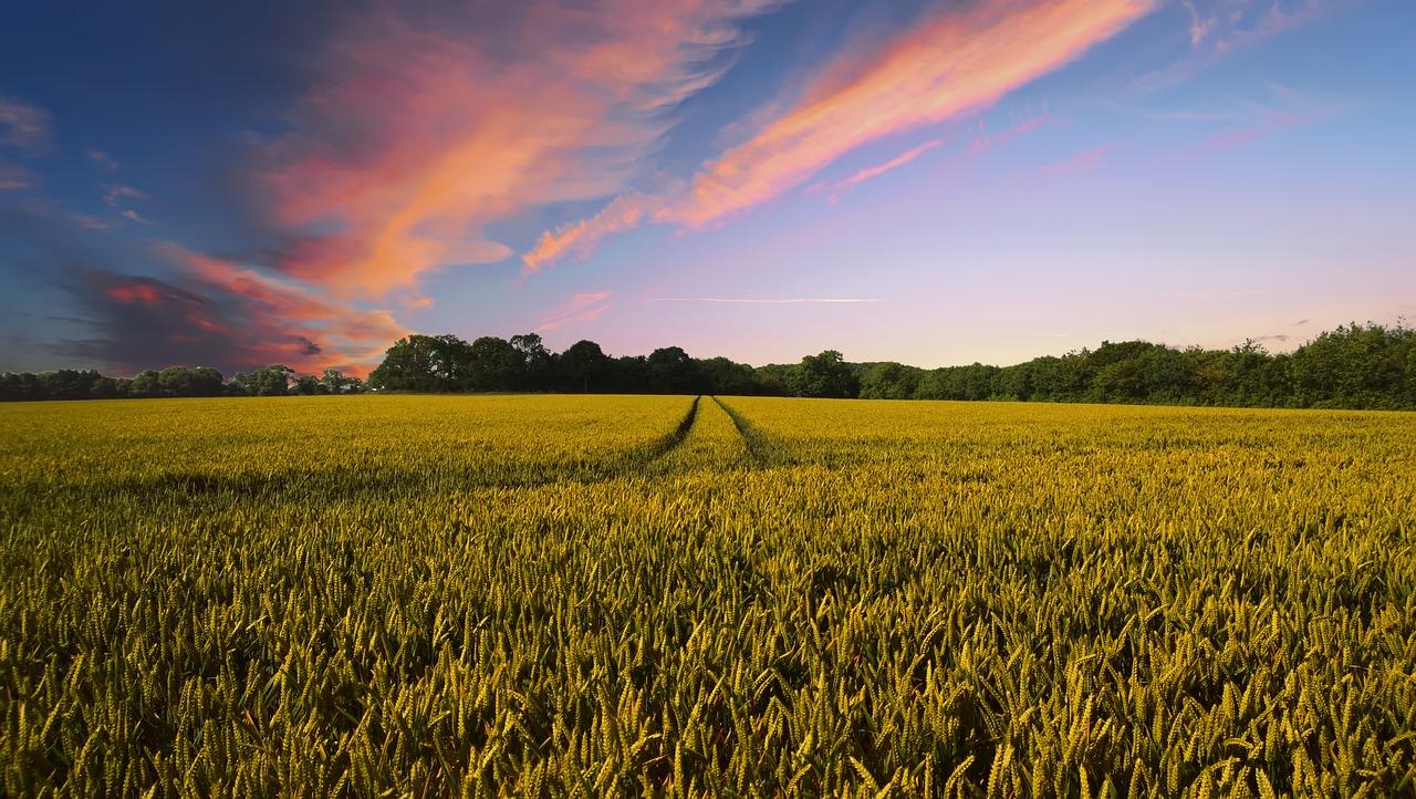 Hoe het is om een landbouwbedrijf te hebben